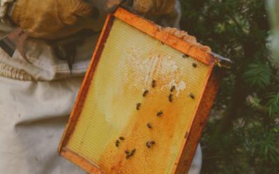 3 choses à savoir sur le miel