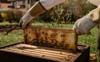 Miels et confitures artisanales